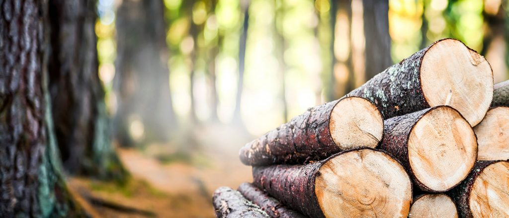 Our future depends on sustainable forestry
